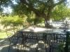 I tavoli all'aperto immersi dal verde intorno e della zona ombra dell'antica quercia