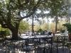 tavoli all'aperto per un pranzo o una cena immerso nel verde dell'antica quercia