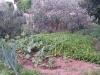 Le nostre verdure