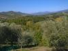 Panorama degli olivi